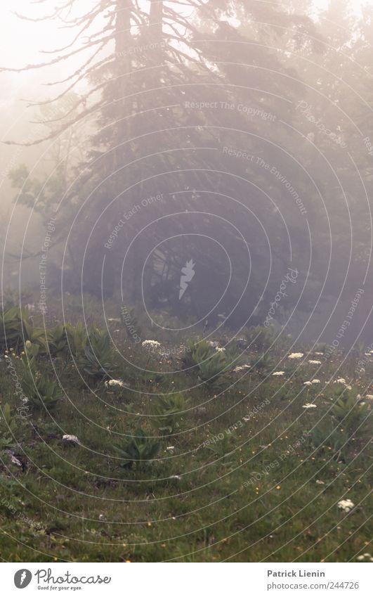 Sunshine and clouds Natur grün Baum Pflanze Ferien & Urlaub & Reisen Einsamkeit Ferne Wald Freiheit Berge u. Gebirge Landschaft Umwelt Regen Luft Wetter Wind