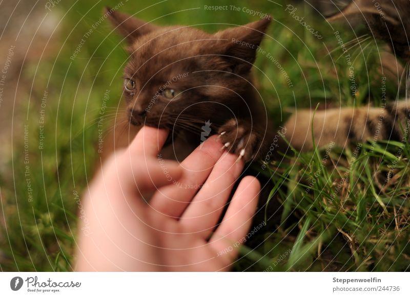 Adoptivmama Katze Mensch Natur Hand grün Pflanze Tier Liebe Umwelt Wiese Bewegung Garten Glück Tierjunges braun wild