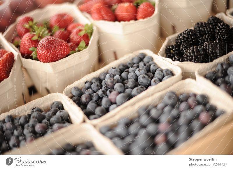 Beerensammlung blau Sommer rot Gesundheit Frucht Lebensmittel Ernährung süß Gesunde Ernährung violett Bioprodukte bezahlen Picknick wählen Erdbeeren