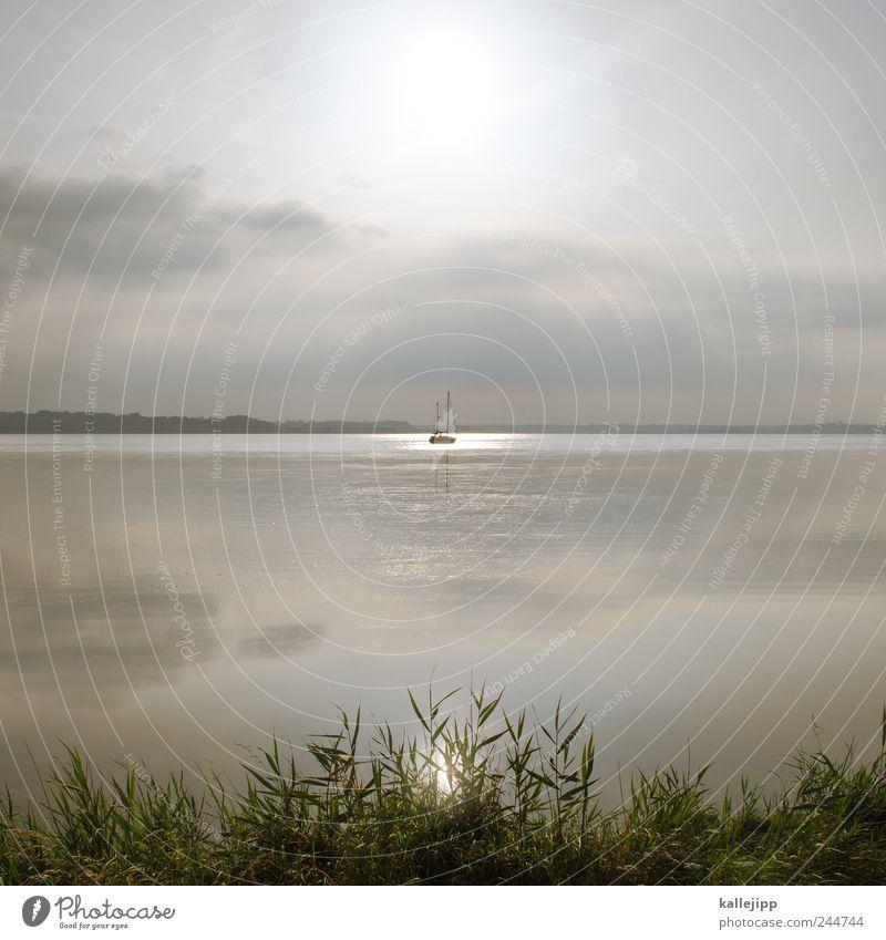 santa maria Natur Pflanze Sonne Sommer Freude Ferien & Urlaub & Reisen Strand Meer Tier Ferne Freiheit Umwelt Landschaft Stil Küste See