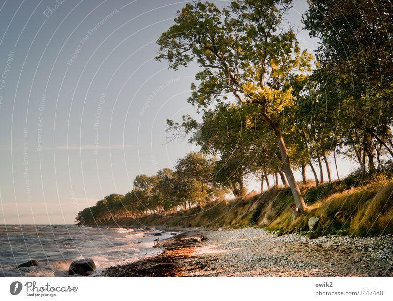 Schiefe Küste Umwelt Natur Landschaft Pflanze Wasser Wolkenloser Himmel Horizont Schönes Wetter Wind Baum Sträucher Ostsee Insel Fehmarn stehen Wachstum Neigung