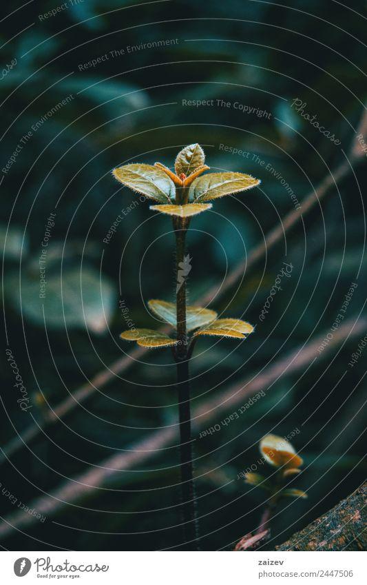 wachsender Ast eines Baumes im Wald schön Berge u. Gebirge Garten Umwelt Natur Pflanze Frühling Herbst Sträucher Blatt Park Wachstum dunkel natürlich wild braun