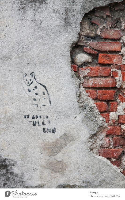Katzenkratzwand alt rot Wand grau Mauer Stein Katze Graffiti kaputt Backstein Verfall Putz abblättern Wandmalereien