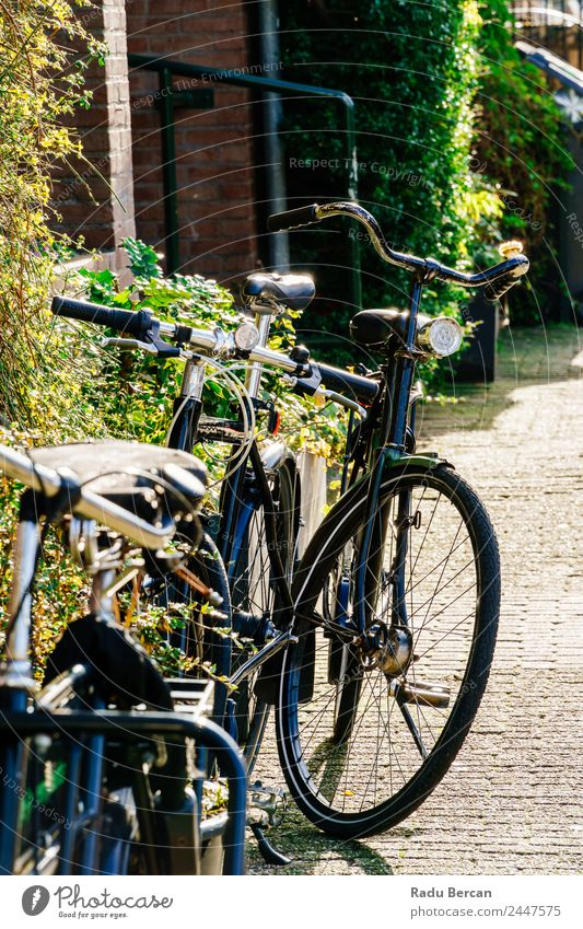 Fahrräder in der Nähe von niederländischen Häusern in Amsterdam City Ferien & Urlaub & Reisen Tourismus Haus Fahrradfahren Herbst Schönes Wetter Kleinstadt