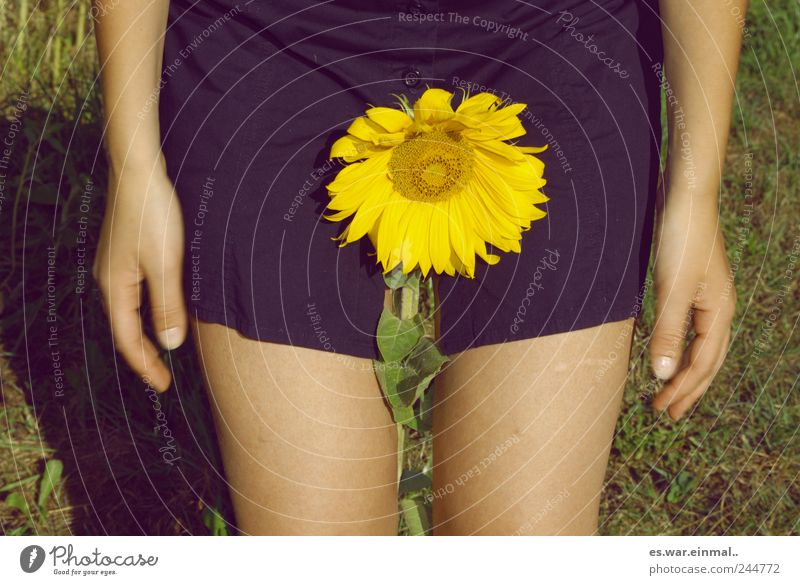 give it some water. schön Blume feminin Blüte Sonnenblume gießen verblüht Sexpraktiken dehydrieren Geschlecht Sprache Umgangssprache Blümchensex