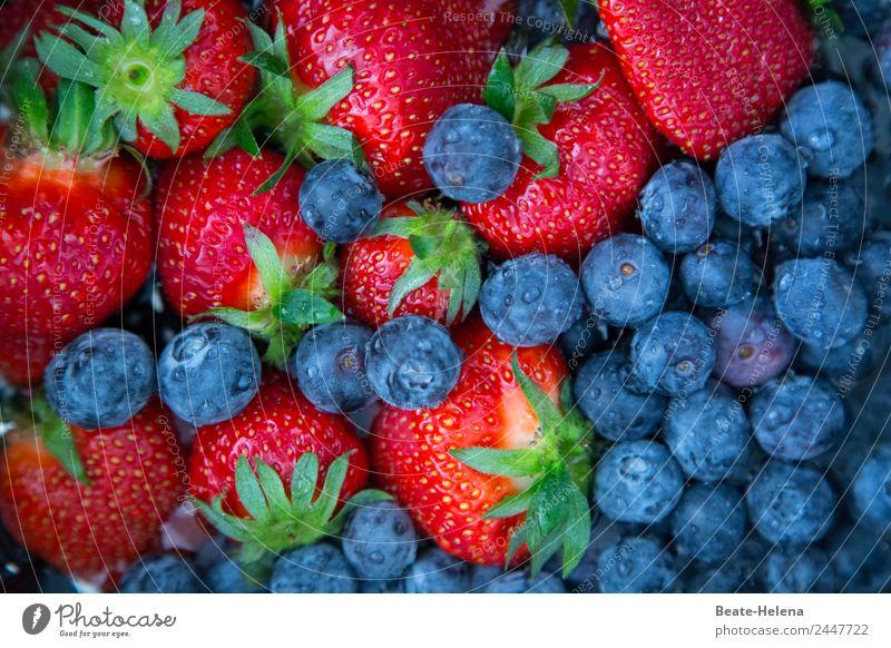 Erdbeeren und Heidelbeeren - leckeres vitamreiches Sommerobst Blaubeeren heidelbeeren blau-rot vitaminreich Frühlingsobst gesund kalorienarm Hochgenuss