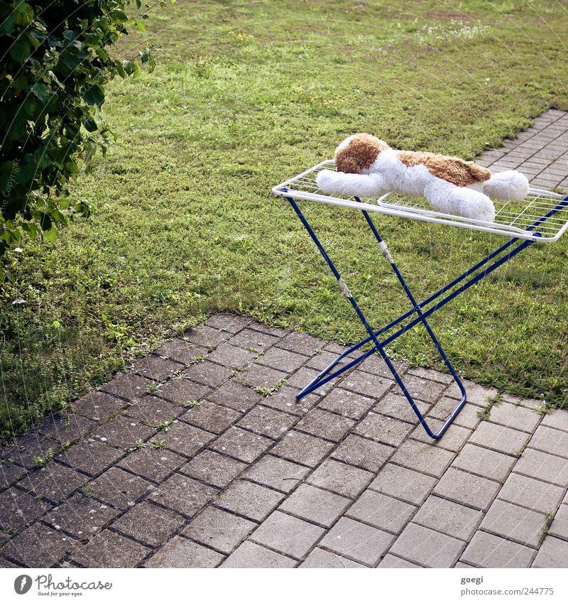 Endlich Urlaub! Sommer Schönes Wetter Pflanze Gras Sträucher Wiese Terrasse Wäscheständer Stofftiere Stein Beton Metall liegen Erholung Ferien & Urlaub & Reisen