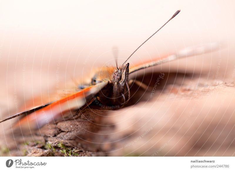 Schmetterling Natur grün schön rot Tier gelb Holz braun Perspektive stehen authentisch nah Tiergesicht Flügel wild Insekt
