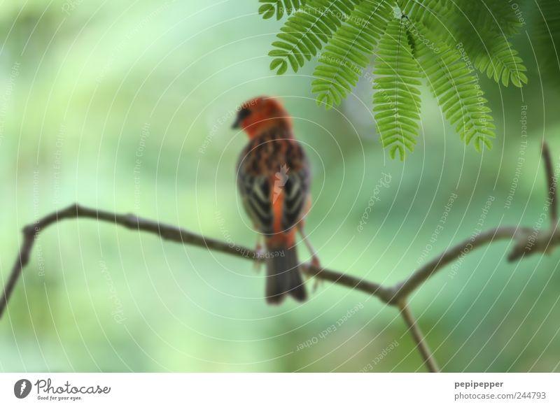 AF oben rechts Natur grün Baum rot Pflanze Sommer Tier Blatt Holz Vogel braun Wildtier Ausflug Flügel Ast Fell