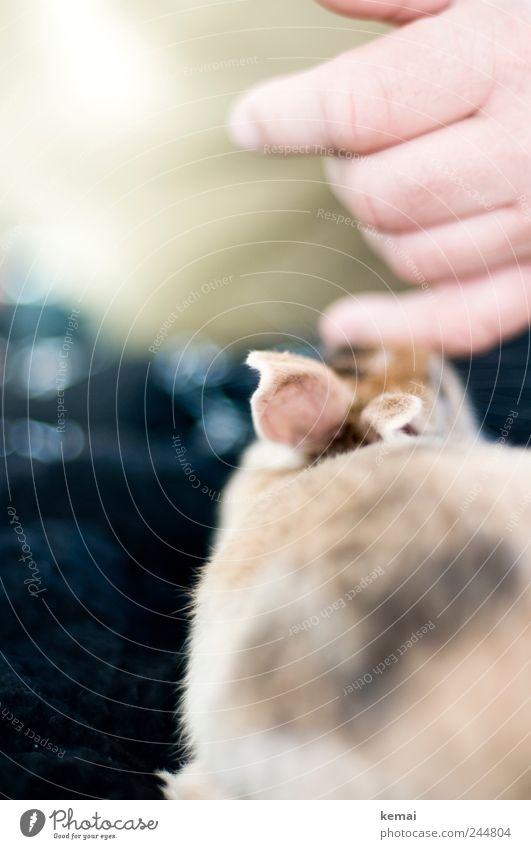 Kuschel-Helmut Tier klein Freundschaft Zusammensein Tierjunges niedlich Ohr Fell Vertrauen Hase & Kaninchen Haustier Sympathie Tierliebe Streicheln Hasenohren
