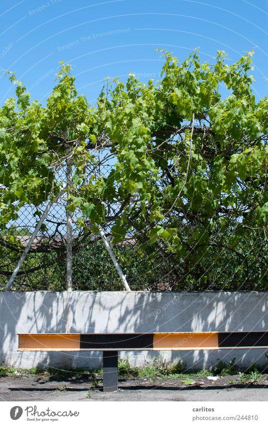 Parkplatz grün blau Blatt schwarz gelb Mauer Wachstum Sträucher Schutz Zaun Barriere Mallorca Pfosten gestreift Ranke