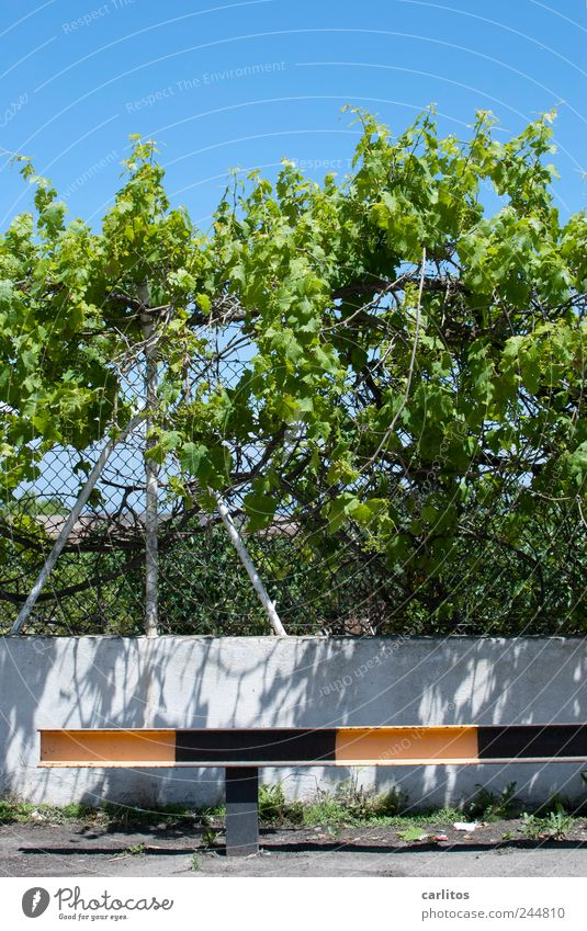 Parkplatz Sträucher Wachstum Leitplanke gestreift schwarz gelb grün blau Zaun Maschendrahtzaun Pfosten Schutz Mauer Barriere Ranke Blatt mediterran Mallorca