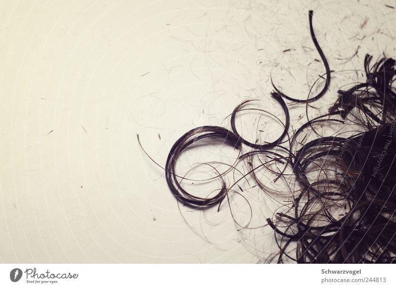 Cut! Friseur Dienstleistungsgewerbe Haare & Frisuren rebellieren geschnitten kürzen schnipp! schnapp! Wandel & Veränderung Restauration Locken Boden
