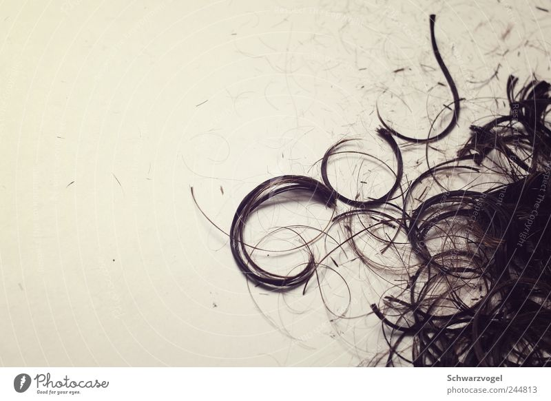 Cut! Haare & Frisuren Boden Wandel & Veränderung Dienstleistungsgewerbe Friseur Locken geschnitten rebellieren kürzen