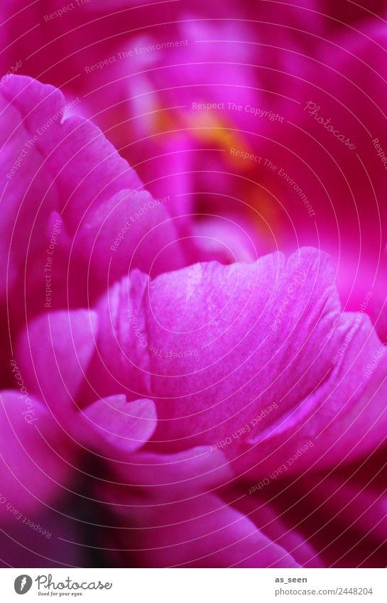 Pretty in Pink Lifestyle elegant exotisch Wellness Leben harmonisch Sinnesorgane Spa Garten Dekoration & Verzierung Feste & Feiern Umwelt Natur Frühling Sommer