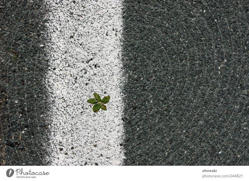 Life is hard (extended version) weiß Pflanze Blatt Straße grau Linie Kraft Wachstum Teer Optimismus Willensstärke Fahrbahn Überleben Grünpflanze Tapferkeit
