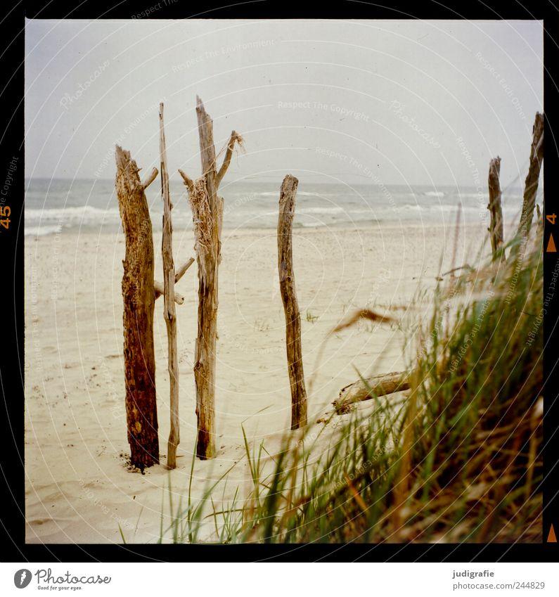 Weststrand Umwelt Natur Landschaft Pflanze Wasser Himmel Klima Gras Küste Strand Ostsee Meer Darß natürlich wild Stimmung Ferien & Urlaub & Reisen Farbfoto