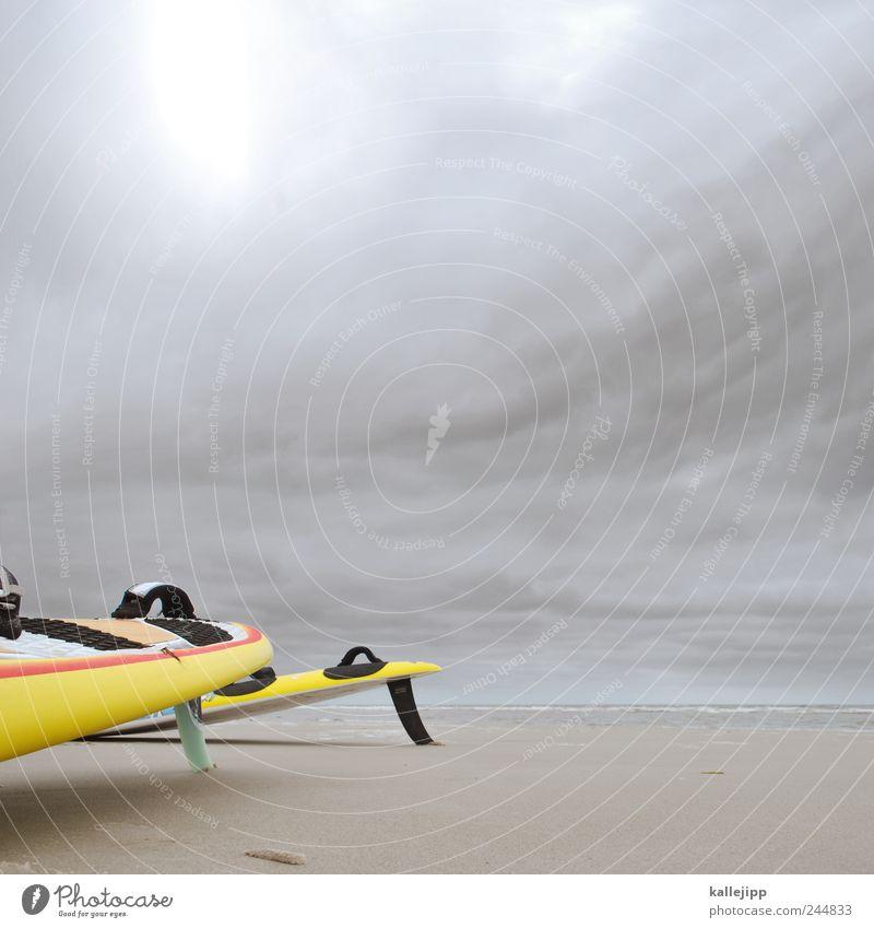 zwei finnen beim expertengespräch Natur Wasser Meer Strand Wolken gelb Umwelt Landschaft Sport Küste Sand Stimmung Horizont Wind Freizeit & Hobby Klima