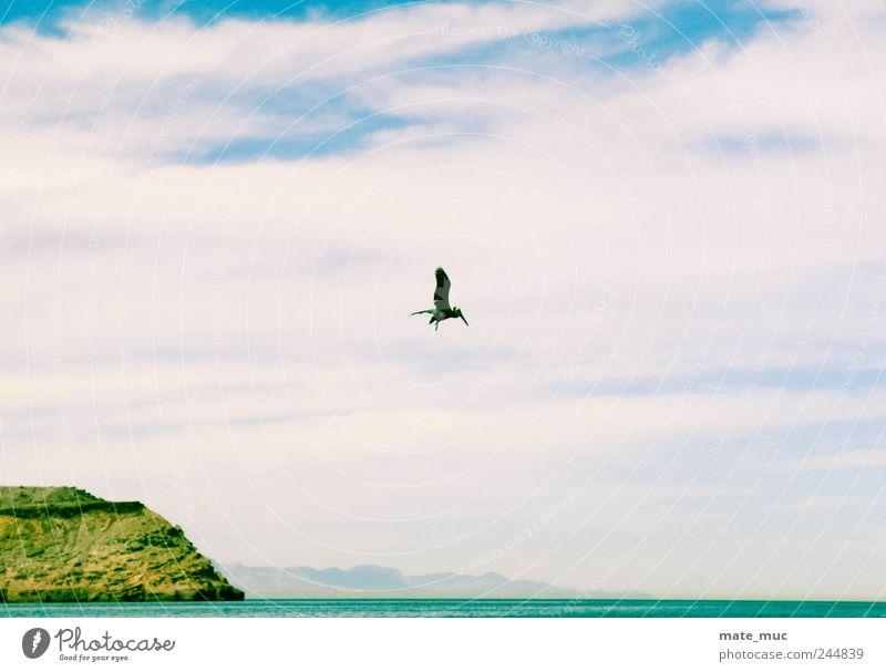 Der Himmel gehört mir Tier Vogel 1 fliegen frei Freiheit Farbfoto Außenaufnahme Menschenleer Morgen Licht
