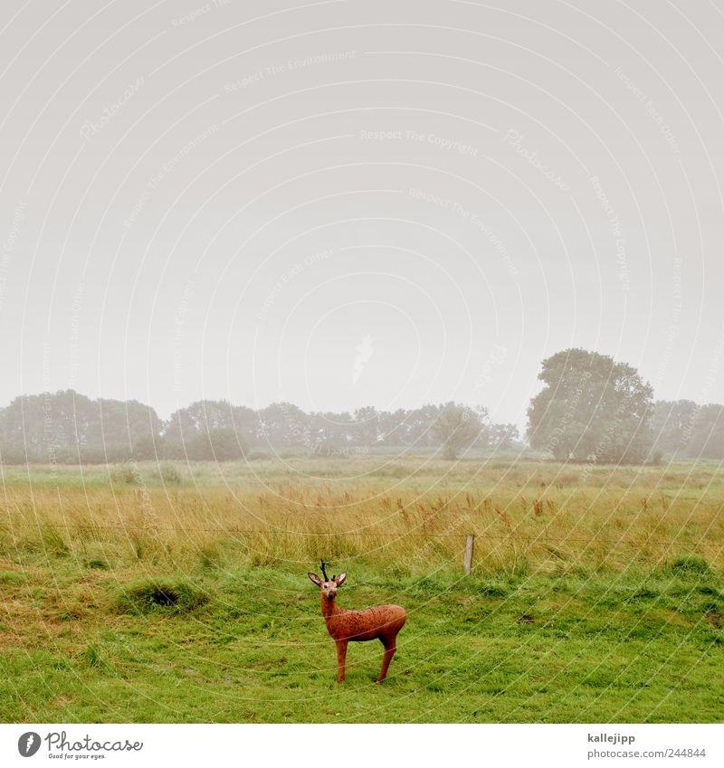 bambi Umwelt Natur Landschaft Pflanze Tier Wolken schlechtes Wetter Nebel Regen Baum Gras Wildtier 1 Jagd Reh atrappe Täuschung falsch Rehkitz Bambi Wiese