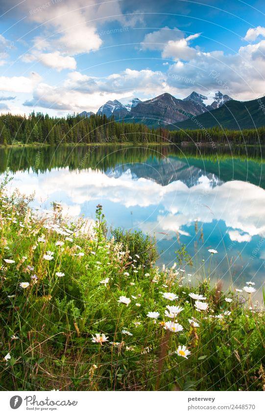 Herbert Lake in Banff National Park, Canada Sommer Natur Schönes Wetter Baum Sträucher Wiese Wald Berge u. Gebirge See Schwimmen & Baden schön blau grau grün
