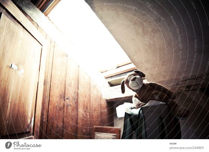 Dachbodenheld Freizeit & Hobby Häusliches Leben Wohnung Kindheit Tür Tier Hund 1 Stofftiere Holz sitzen alt lustig niedlich braun Vergangenheit Dachfenster