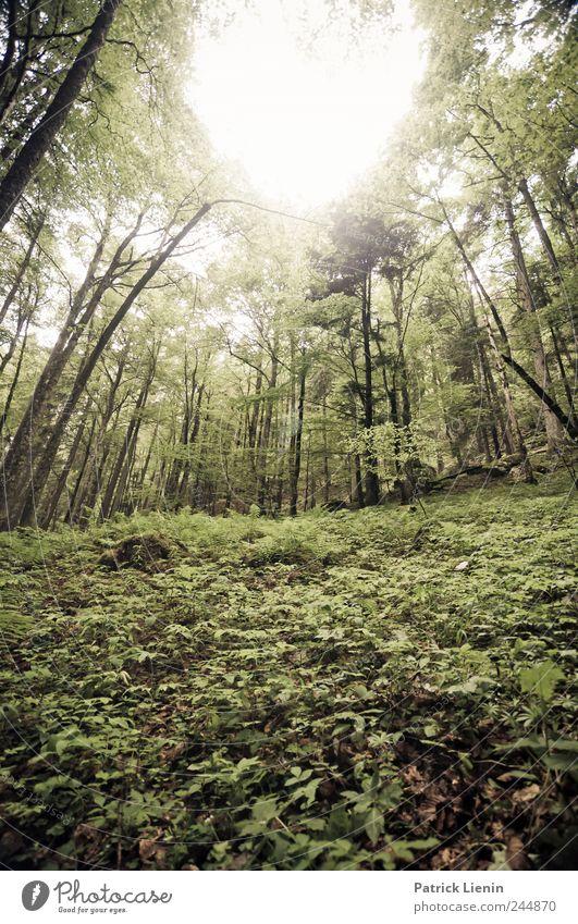 green day Himmel Natur Ferien & Urlaub & Reisen Pflanze Ferne Umwelt Landschaft Berge u. Gebirge Freiheit Stimmung Wetter Freizeit & Hobby Felsen Nebel wild