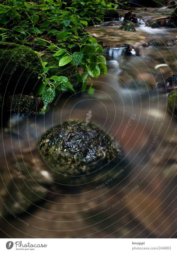 am Waldbach Natur Wasser grün Pflanze Sommer Ferien & Urlaub & Reisen ruhig schwarz Wald Erholung Stein braun Umwelt elegant Ausflug Wachstum