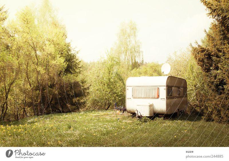 WWW Lifestyle Stil Freizeit & Hobby Camping Häusliches Leben Umwelt Natur Landschaft Pflanze Sommer Schönes Wetter Baum Gras Sträucher Wiese Wald