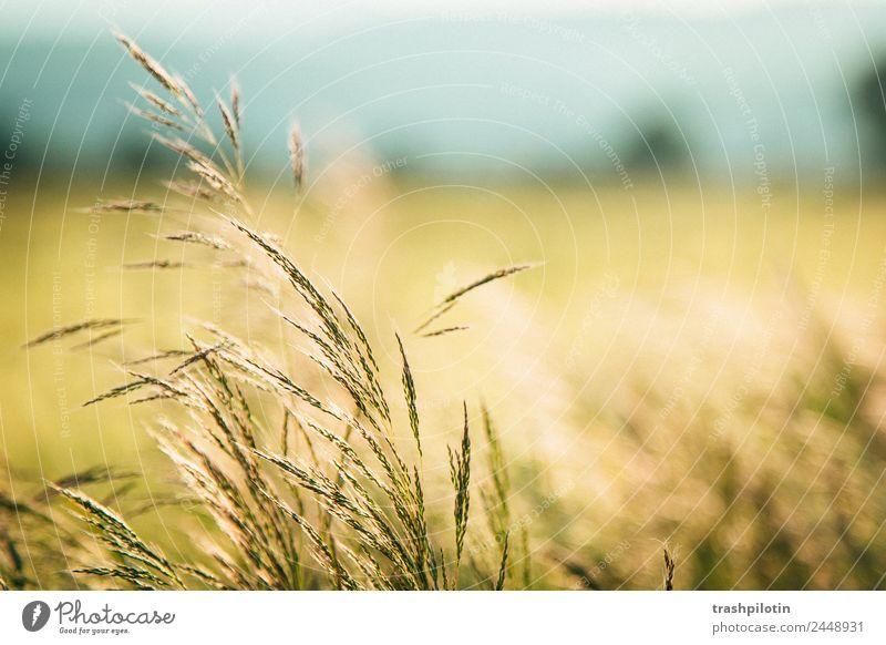 Land III Natur Landwirtschaft Sonnenuntergang Feld Landschaft Getreide Getreidefeld Kornfeld Romantik Freiheit
