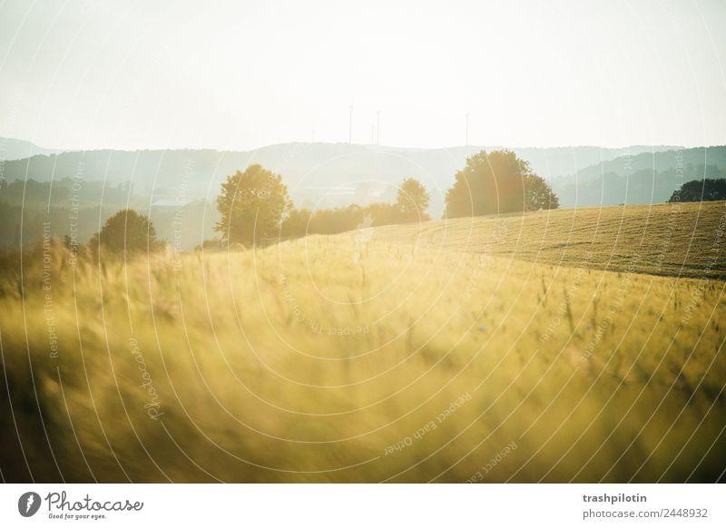 Land II Natur Landwirtschaft Sonnenuntergang Feld Landschaft Getreide Getreidefeld Kornfeld Romantik Freiheit