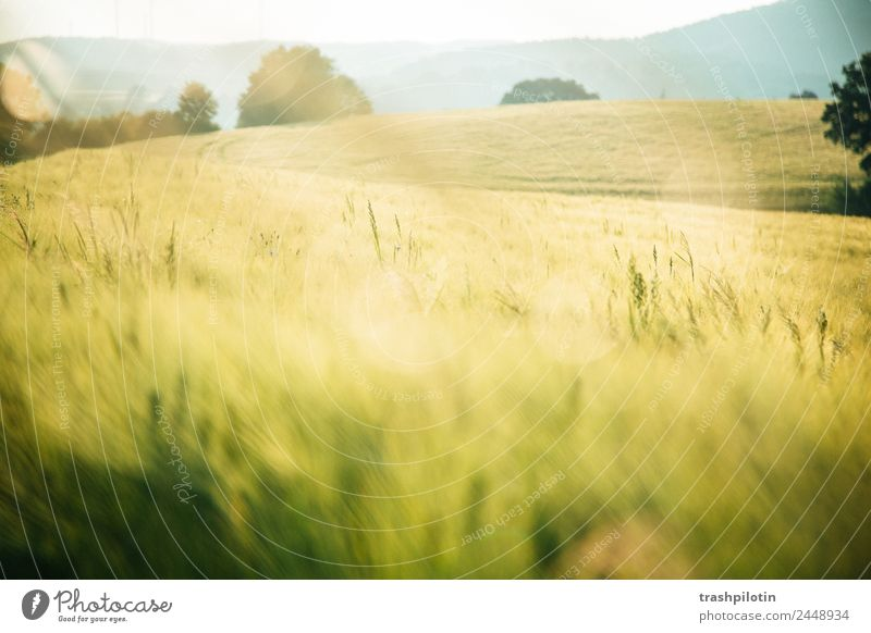 Land Natur Landwirtschaft Sonnenuntergang Feld Landschaft Getreide Getreidefeld Kornfeld Romantik Freiheit