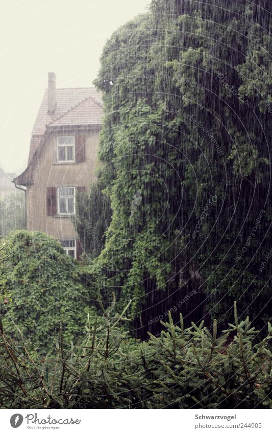 Wann wird's mal wieder richtig Sommer? Wassertropfen Wetter schlechtes Wetter Regen Baum Fassade Garten nass Langeweile Erwartung Klima Stimmung Umwelt Unlust