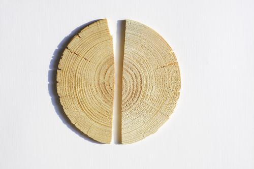 Holz Natur Baum Blume gut Holzbrett Hälfte geteilt gebrochen Jahresringe Scheibe Mitte kernholz Spalte Farbfoto Gedeckte Farben Nahaufnahme Detailaufnahme