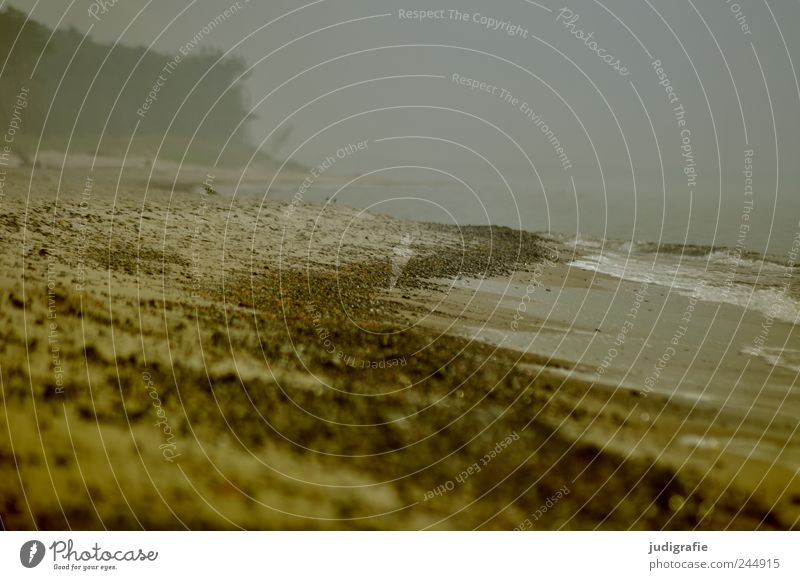 Weststrand Natur Wasser Strand dunkel kalt Landschaft Regen Stimmung Küste Umwelt Nebel Klima bedrohlich wild natürlich Ostsee