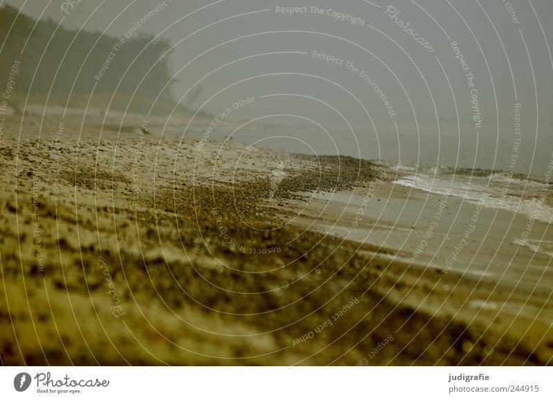 Weststrand Umwelt Natur Landschaft Wasser Klima schlechtes Wetter Nebel Regen Küste Strand Ostsee Darß bedrohlich dunkel kalt natürlich wild Stimmung Farbfoto