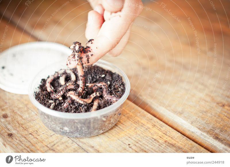 Da ist der Wurm drin Hand Tier Holz Freizeit & Hobby Erde Wildtier Finger Tisch Dose Ekel Schwarm Holztisch Tischplatte Wurm Angelköder Vorbereitung
