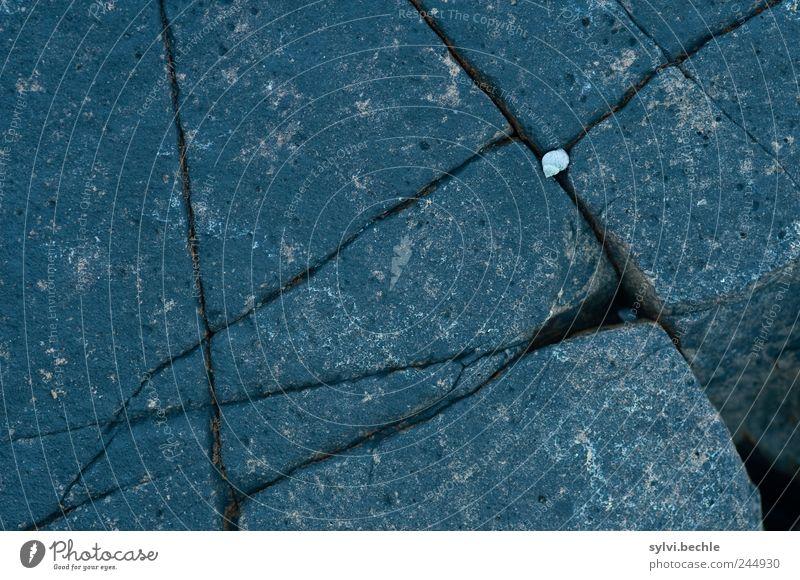 Schottland im Detail I Umwelt Natur Tier Felsen Riff Meer Wildtier Schnecke 1 Stein liegen eckig klein grau Einsamkeit Felsspalten Muschel Schneckenhaus einsam