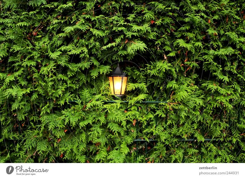 Licht, mittig Umwelt Natur Landschaft Pflanze Sommer Sträucher Blatt Grünpflanze Garten Park dunkel Traurigkeit Müdigkeit Sehnsucht Heimweh Fernweh Einsamkeit