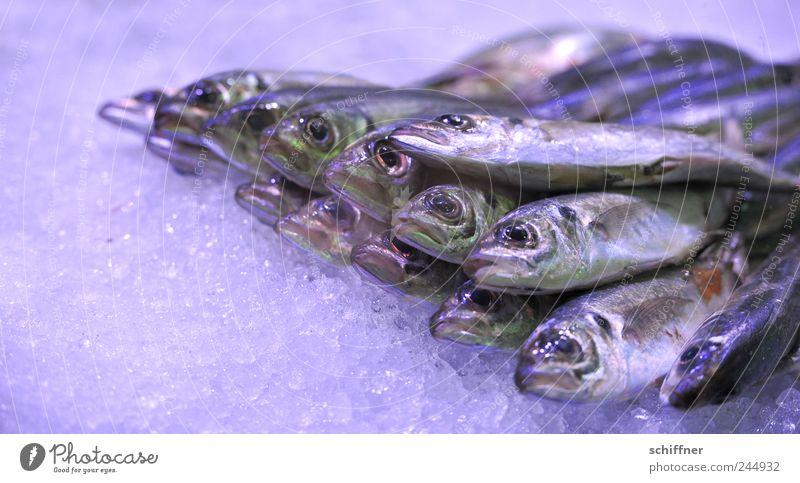 Ja, isn scho wieda Freitag? Ernährung Eis Lebensmittel Fisch liegen Tiergruppe lecker Markt Fischereiwirtschaft Angebot Meerestier Makrele stinkend