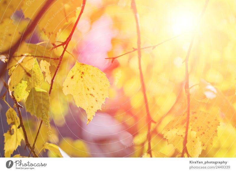 Natur Pflanze Farbe schön Sonne Baum Blatt Wald gelb Herbst natürlich Schule Textfreiraum braun hell Park