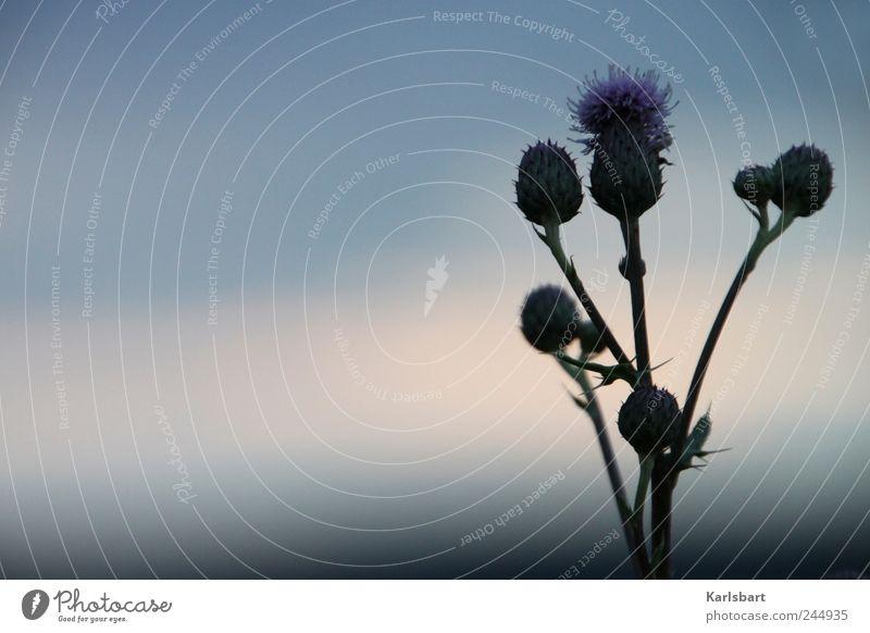 schattenblume. Himmel Natur Pflanze Sommer ruhig dunkel Garten Blüte Zufriedenheit Feld Wachstum Wandel & Veränderung Sträucher Landwirtschaft Gleichgewicht
