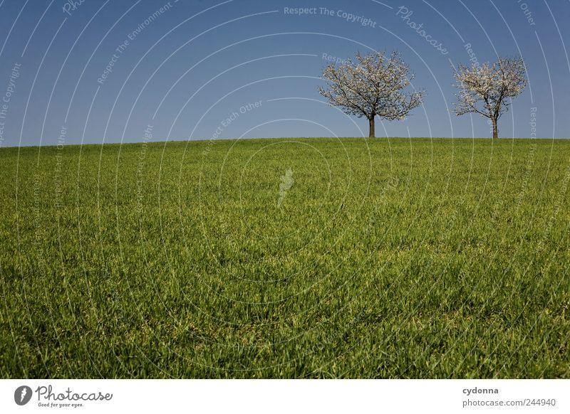 Zurück zum Frühling harmonisch Wohlgefühl Erholung ruhig Ausflug Ferne Freiheit Umwelt Natur Landschaft Wolkenloser Himmel Baum Gras Wiese Hügel einzigartig