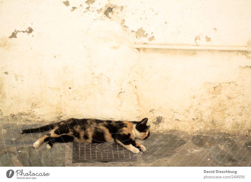 Hey, du schnarchst... Tier Haustier Katze 1 braun Tierliebe ruhig Erholung schlafen Pause Mittagspause Geschnarche Wand Mauer verschlafen faulenzen bequem