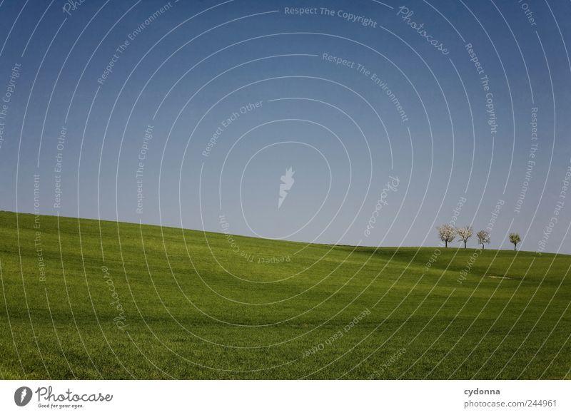 ___________I_I_I_I__ Natur schön Baum Einsamkeit ruhig Ferne Erholung Umwelt Landschaft Leben Wiese Freiheit Gras Frühling Blüte träumen
