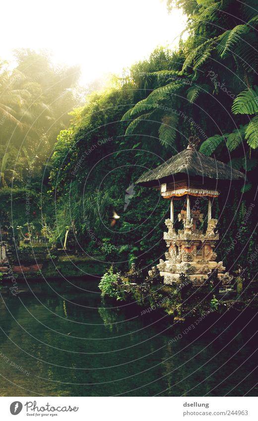 Tempel im Wasser mit Regenwald im Hintergrund Umwelt Natur Landschaft Pflanze Sommer Schönes Wetter Garten Park Urwald Indonesien Bali Asien Hütte Ruine Gebäude