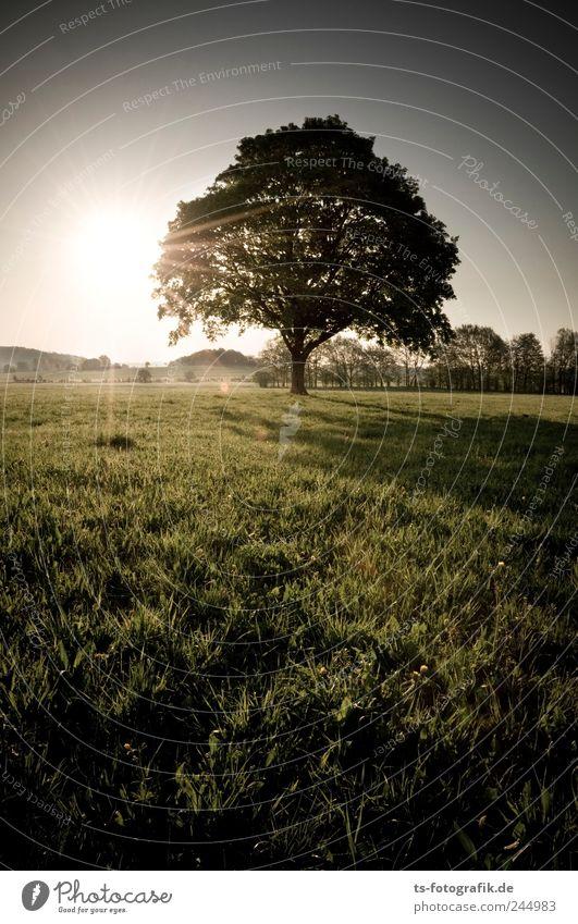 Wo sind all die Häuser hin? Himmel Natur grün schön Baum Ferien & Urlaub & Reisen Pflanze Sonne Sommer Tier Ferne Umwelt dunkel Wiese Landschaft Gras