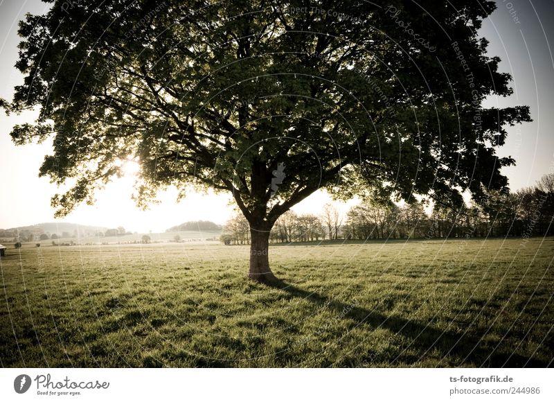 Wiesenwurzler Natur grün Baum Ferien & Urlaub & Reisen Pflanze Sommer Blatt Umwelt Landschaft Freiheit Gras Luft Park Horizont Erde