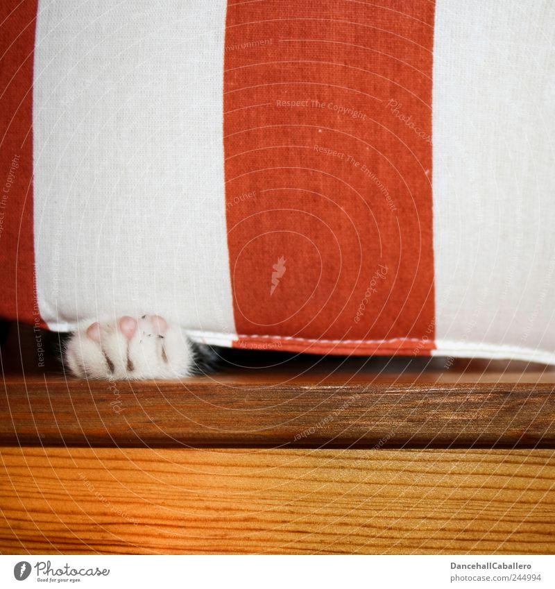 Versteckspiel... Möbel Stuhl Tier Haustier Katze Krallen Pfote 1 Tierjunges Jagd Spielen warten Freundlichkeit Fröhlichkeit Glück klein lustig niedlich Freude