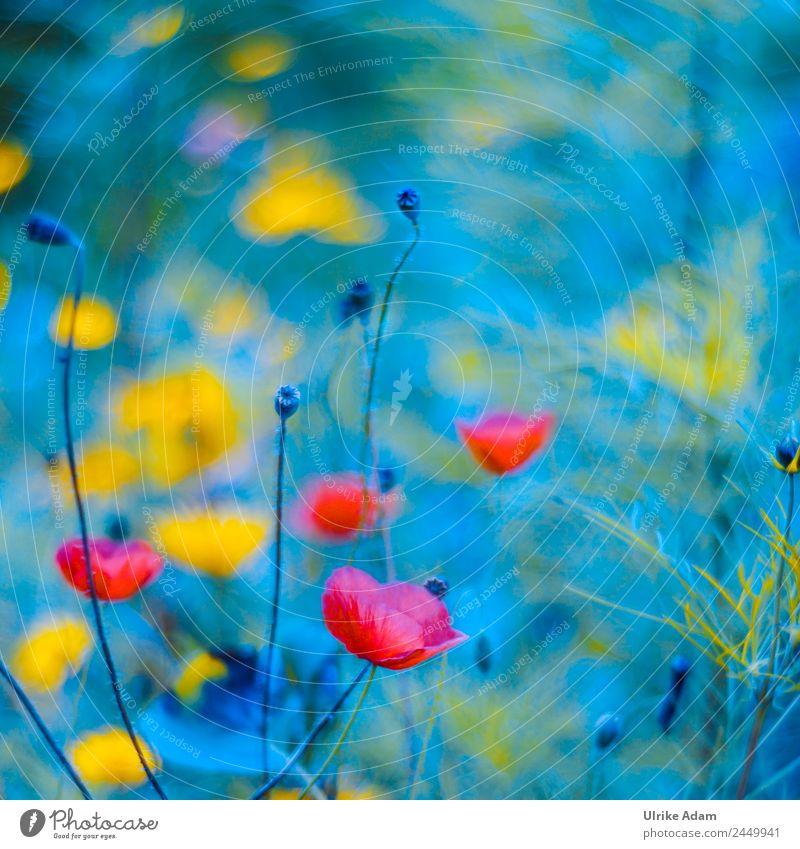 Abstrakt - Wildblumenwiese - Natur elegant Stil Design schön Leben Schwimmbad Dekoration & Verzierung Tapete Bild Feste & Feiern Pflanze Sonnenlicht Sommer